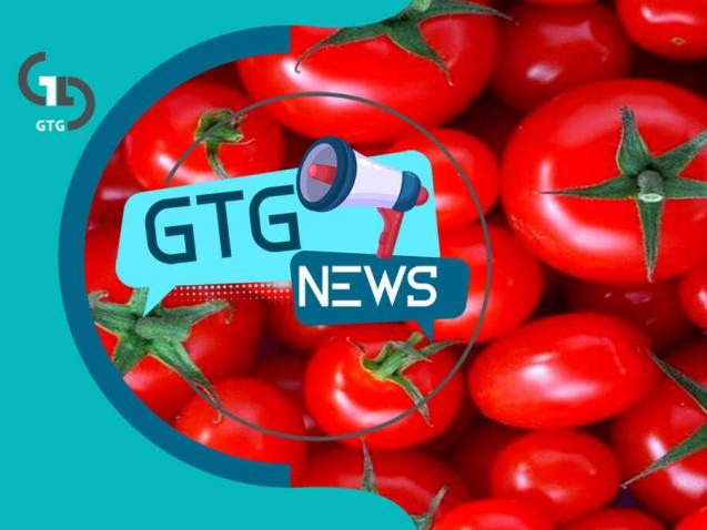 گوجه فرنگی صادراتی